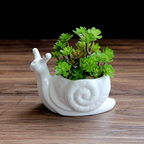 Candyqueen 1Pcs Ceramic Succulent Planter Small Plant Pot Creative Snail Containers Garden Home