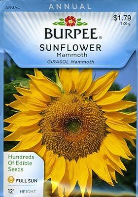 Burpee 57745 Sunflower Mammoth Seed Packet