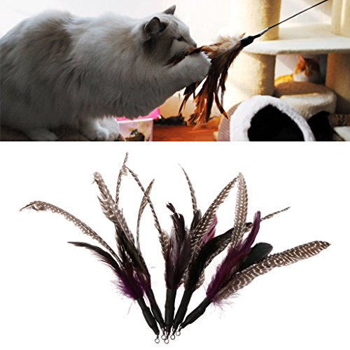 - Qupida 5PCS Handmade Natural Feather Cat Toy Da Bird Refills Interactive Teaser Sticks, Cat Toy Feather Replacement