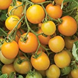 hanging cherry tomato kit - Burpee Tumbling Tom Yellow Hybrid Tomato Seeds 10 seeds