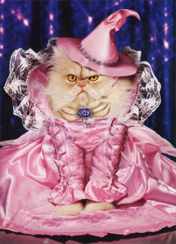Joy The Good Witch Funny Cat Halloween Card -