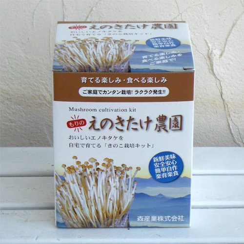 エノキ栽培キット