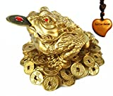 Feng Shui Money Frog (Three Legged Toad) Hold Two Ignots on a Pile of Money for Wealth Luck
