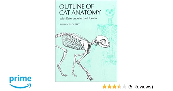Amazon Outline Of Cat Anatomy With Reference To The Human
