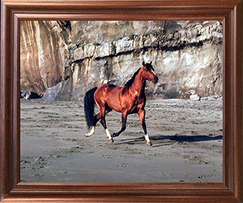 - Impact Posters Gallery Framed Wall Decor Arabian Horse Running on Beach Animal Mahogany Picture Art Print (18x22)