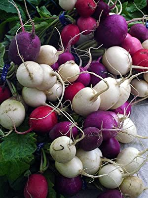 Easter Egg Radish Seeds 1.2 grams - GARDEN FRESH PACK!