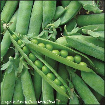 - Sugar Ann Garden Pea Seeds (Sugar Snap), 50+ Premium Heirloom Seeds, ON SALE!, (Isla's Garden Seeds), Non Gmo Organic, 95% Germination