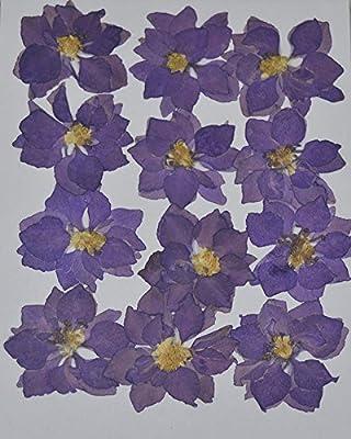 LoveDiyLife Purple Larkspur real pressed dried flowers from LoveDiyLife