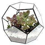 "Barnyard Designs Watertight Glass Terrarium Succulent Plant Container Geometric Pentagon Shape Tabletop Decor 8"" x 6"" (Black)"