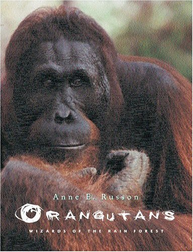 orangutans-wizards-of-the-rain-forest