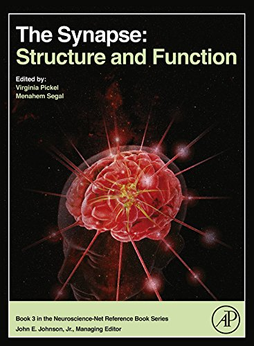 The Synapse: Structure and Function (Neuroscience-net Reference Book Book 3) (Function Of Dendrites)