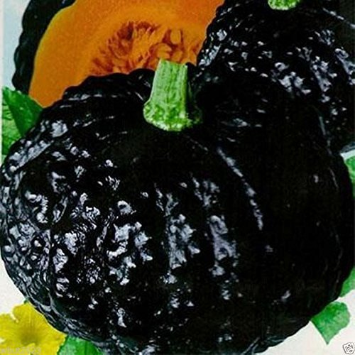 10 Seeds Japanese Black Pumpkin - Kabocha Seeds - Open pollinated, Heirloom vegetable Seeds (Halloween Cutouts For Pumpkin Carving)
