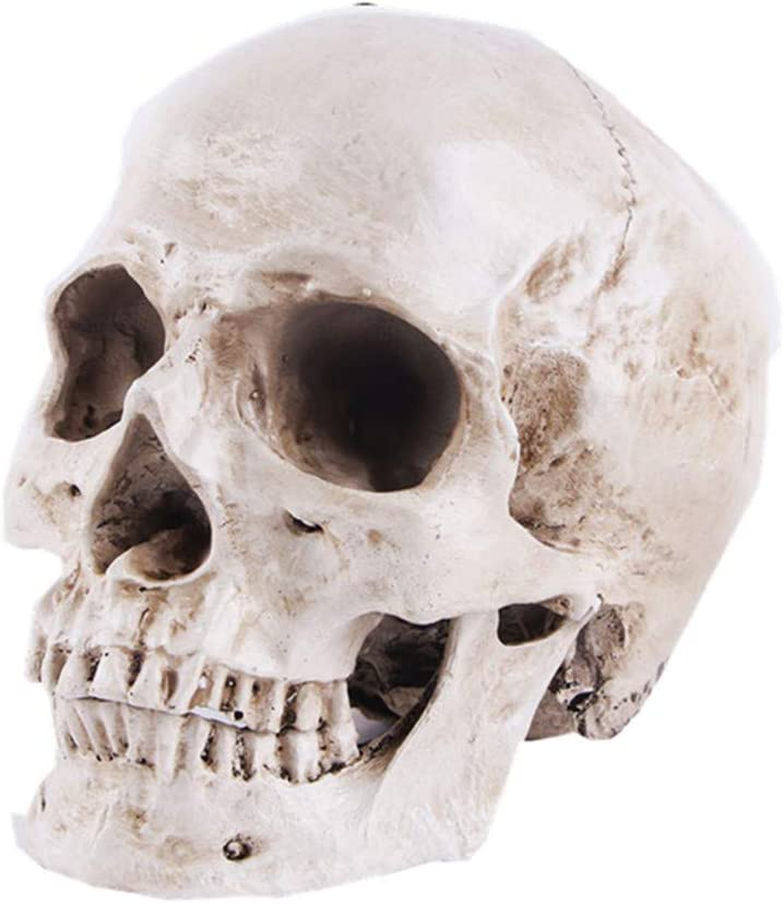 Upgraded Life Size Human Head Skull Anatomical Model with Newest Laser-Etched Fonts Not Hand Write Number Not Smudged for Medical Student Human Anatomy Study Course