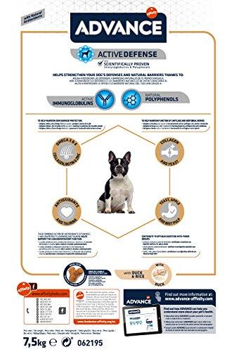 Advance Pienso para Perro Bulldog Francés con Pollo - 7,5 kg: Amazon.es: Productos para mascotas