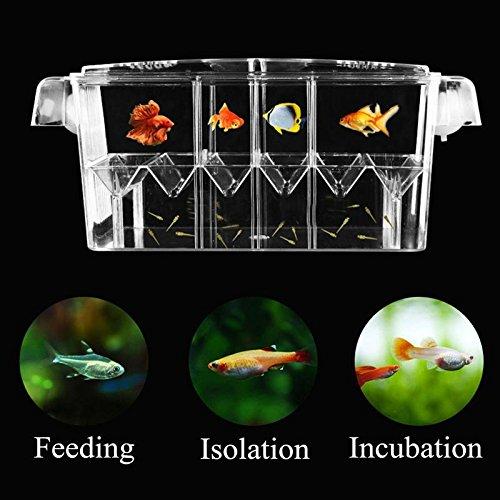 4 Grides Breeding Incubator Isolation Box Fish Tank Aquarium Hatching Transparent Boxes Multifunctional Acrylic Fish Tank Holder by LEO_Pet supplies (Image #2)