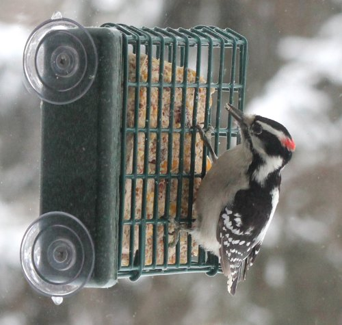 Kettle Moraine Window Mount Single Suet Cake Woodpecker Bird Feeder