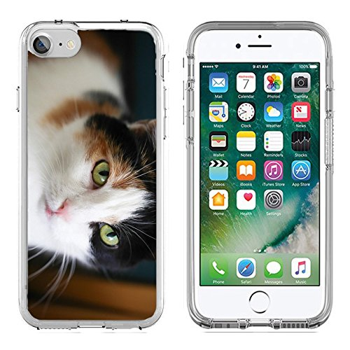 MSD Apple iPhone 7/iPhone 8 Clear case Soft TPU Rubber Silicone Bumper Snap Cases iPhone7/8 IMAGE ID: 32776569 Fat calico cat with a sad face in a closeup view indoor (Fat Cat Accessory Pack)