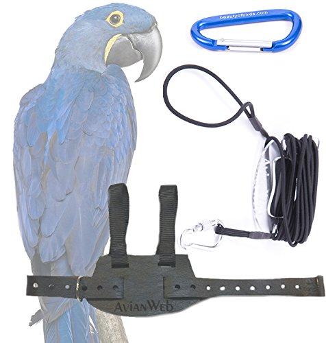 (Avianweb EZ Macaw Bird Harness with 8 Ft Leash (Jumbo (Largest/Heaviest Hyacinth Macaws), Black) )