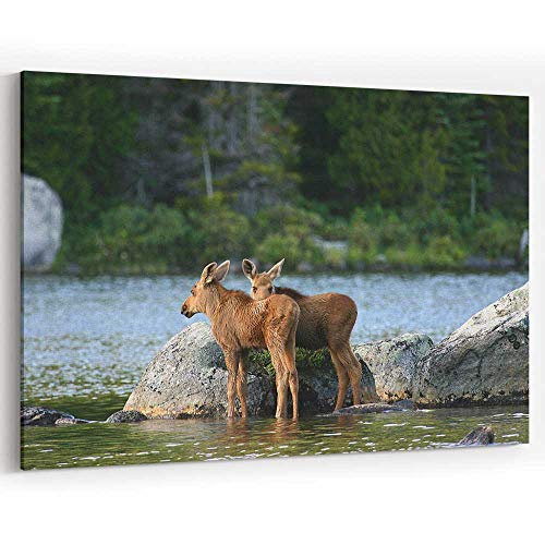 (Moose Calves in Baxter State Park Canvas Art Wall Dector Painting Wall Art Picture Print on)