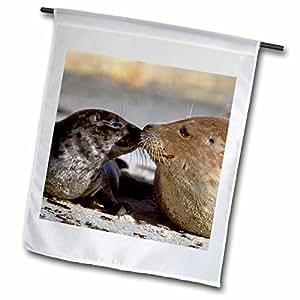 3dRose fl_88184_1 California, La Jolla, Harbor Seals-Us05 Bja0169-Jaynes Gallery Garden Flag, 12 by 18-Inch