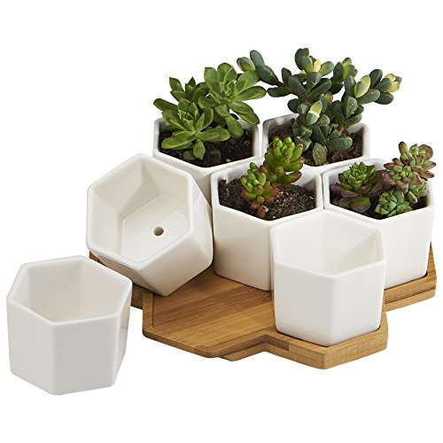 ots Indoor, 7 Pack 2.75 Inch Modern White Ceramic Small Hex Succulent Cactus Flower Plant Pot with Bamboo Tray for Indoors Outdoor Office Home Garden Kitchen Decor (Hexagon) (Urn Pot)