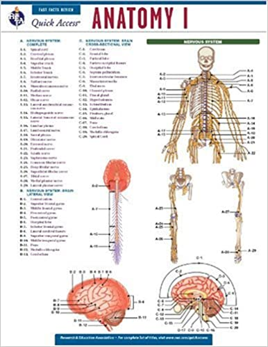 Anatomy 1 - REA\'s Quick Access Reference Chart (Quick Access ...