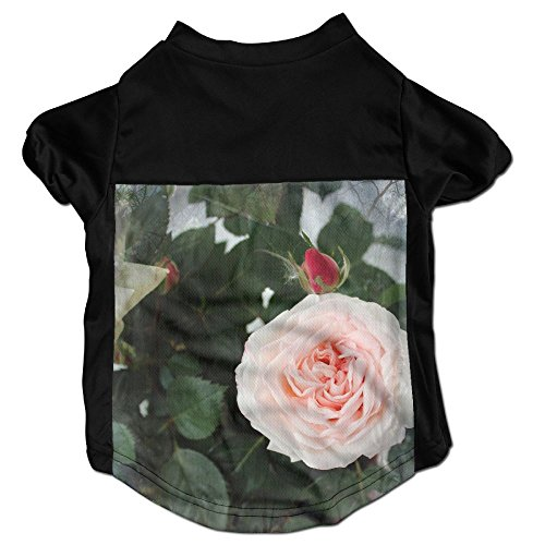 n Sleeveless Pet Supplies Dog Cat Clothes Beautiful Pink Roses Bright Green Pink Petals Rose In Full Bloom Pet Apparel Clothing M Black ()