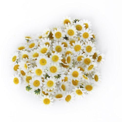 Akord Lot de 100 Têtes de fleurs artificielles blanches Gerbera Daisy pour fête de mariage, bricolage. Plastique.