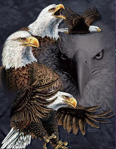 3D Home Wall Art Decor Lenticular Pictures, Eagle Collection for sale  Delivered anywhere in USA