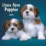 Lhasa Apsos Puppies 2009 7X7 Mini Wall Calendar
