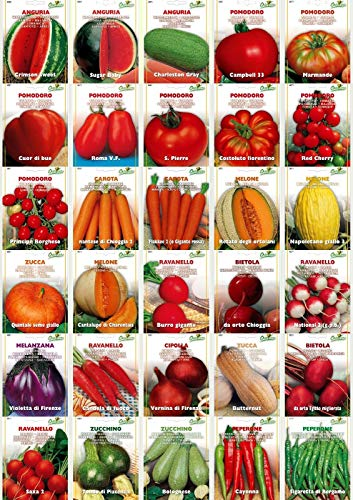 Go Garden Radish - Candela: Vegetables and Fruits Seeds Top Quality 29 Varieties to Choose Tomato Melon ()