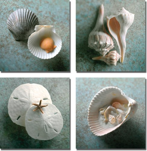 Scallops-Whelks-Sand-Dollars-Shells-in-Shell-by-Gayle-and-Glen-Wans-4-pc-Premium-Stretched-Canvas-Set-Ready-to-Hang