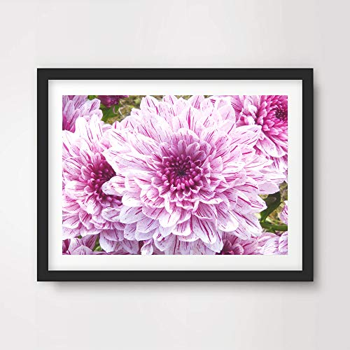 PINK DAHLIA CHRYSANTHEMUM FLORAL FLOWERS PHOTO ART PRINT Poster Home Decor Botanical Nature Photography Wall Picture A4 A3 A2 (10 Size Options)