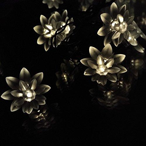 Solar Christmas Fairy String Lights 16.4ft 4.8M 20Leds Led Double Lotus Flower Lights for Outdoor Garden Patio(Warm White) (Decoracion Para Autos compare prices)