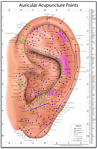 Auricular Acupuncture Points Chart (Charts And Posters Acupuncture)