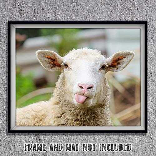 Sassy Lamb- 8 x 10