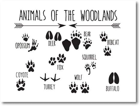 Amazon Com Dayanzai Animal Tracks Woodland Nursery Wall Art Canvas Print Animal Footprints Field Guide Painting Picture Kids Room Wall Art Decor 50x70cm No Frame Posters Prints