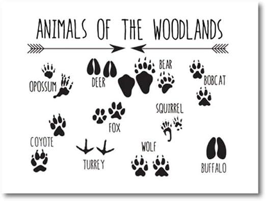 Animal Poster Field Guide Series Bear Woodland Nursery Art Prints Fox Deer