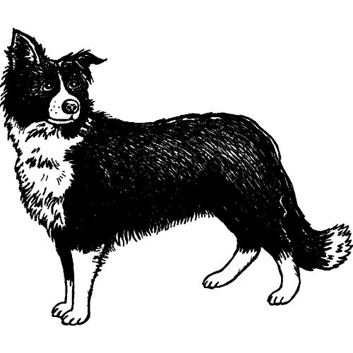 (A8 'Border Collie Sheepdog' Unmounted Rubber Stamp (RS00024935))