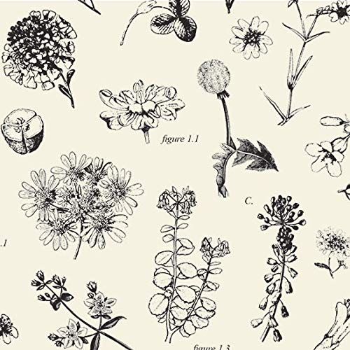 Boutique Printed Tissue Paper for Gift Wrapping with Elegant Botanical Illustrations, Decorative Tissue Paper - 24 Large Sheets, 20x30 (Tissue Gift Printed)
