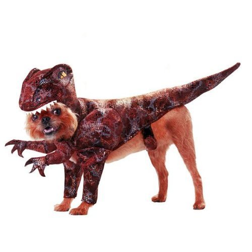 Raptor Pet Costume - Small (Animal Planet Raptor Dog Costume)