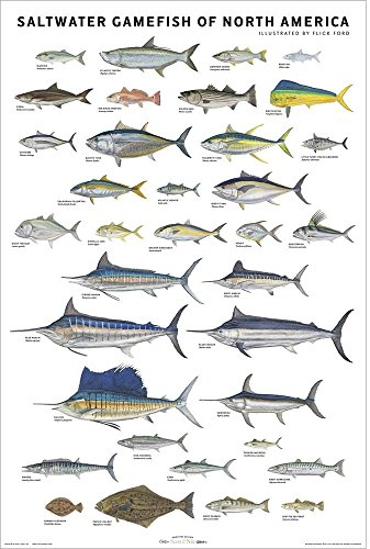 (Picture Peddler Saltwater Gamefish of North America by Flick Ford  Fishing Tarpon Wahoo Swordfish Bluefin Marlin 24x36)
