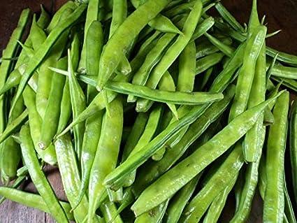 200 Cyamopsis tetragonoloba Seeds Cluster bean Guar Gavar Guwar Guvar bean
