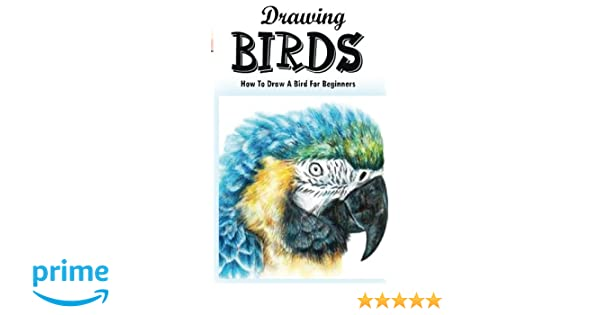 Drawing Birds How To Draw A Bird For Beginners How To Draw Birds