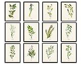 Watercolor Herbs Print Set 12 Giclee Fine Art Prints - Unframed