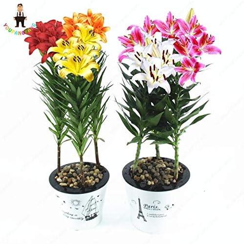 50pcs / bag Productos para el Hogar Semillas Semillas de interior Flor S para jardín: Gris oscuro: Amazon.es: Jardín