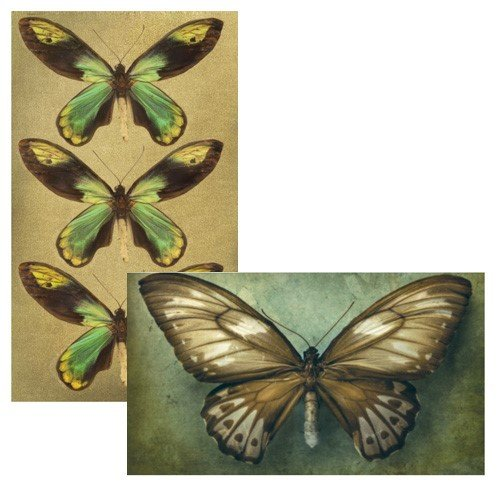 World Buyers Decorative Matches, Butterflies, Set of 2 Matchboxes -