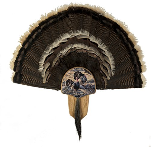Country Turkey - Walnut Hollow Country Turkey Fan Mount & Display Kit, Oak Grand Slam Series Merriam's Turkey Image
