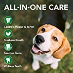Vet's Best Enzymatic Dog Toothpaste | Teeth Cleaning and Fresh Breath Dental Care Gel | Vet Formulated 12