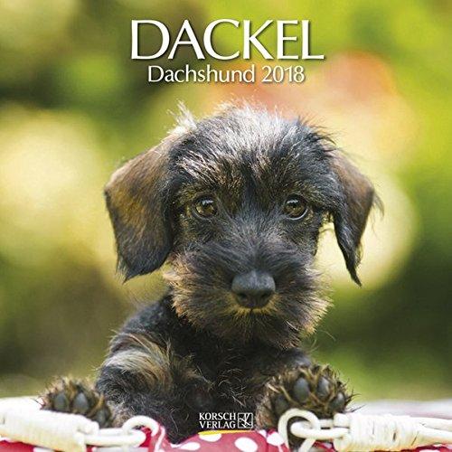Dackel 2018: Broschürenkalender mit Ferienterminen. Hunde-Kalender. 30 x 30 cm